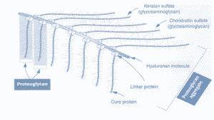 Proteoglycan la chat gi
